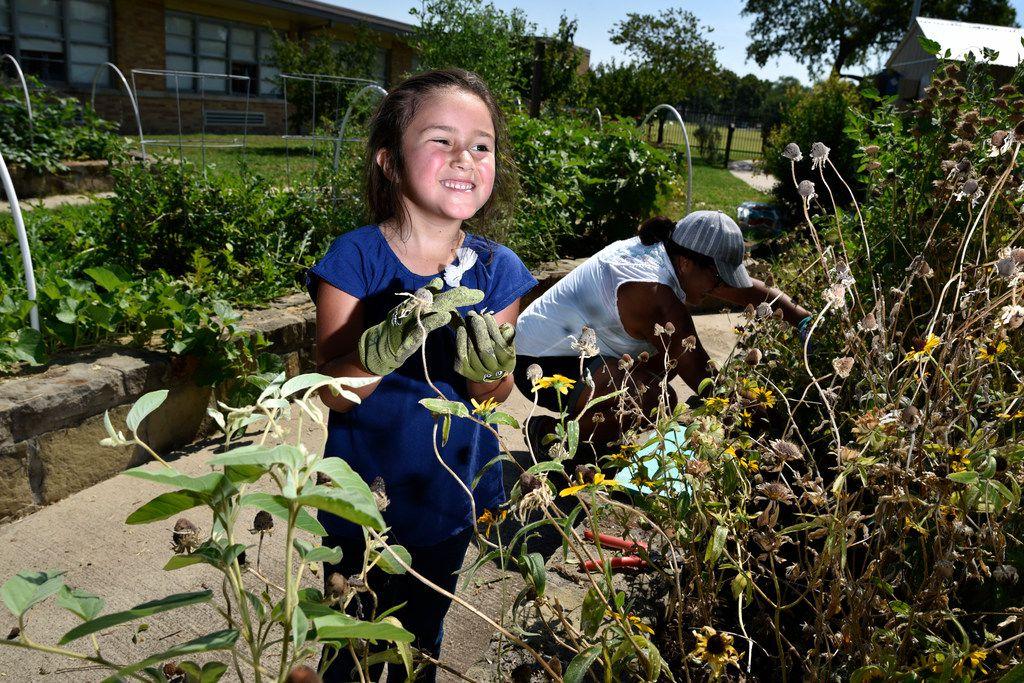 Sophia Terry, 6, tends to a wildflower garden bed with her mother Maria Amaya, 36, in the Edwin J. Kiest Elementary School garden.