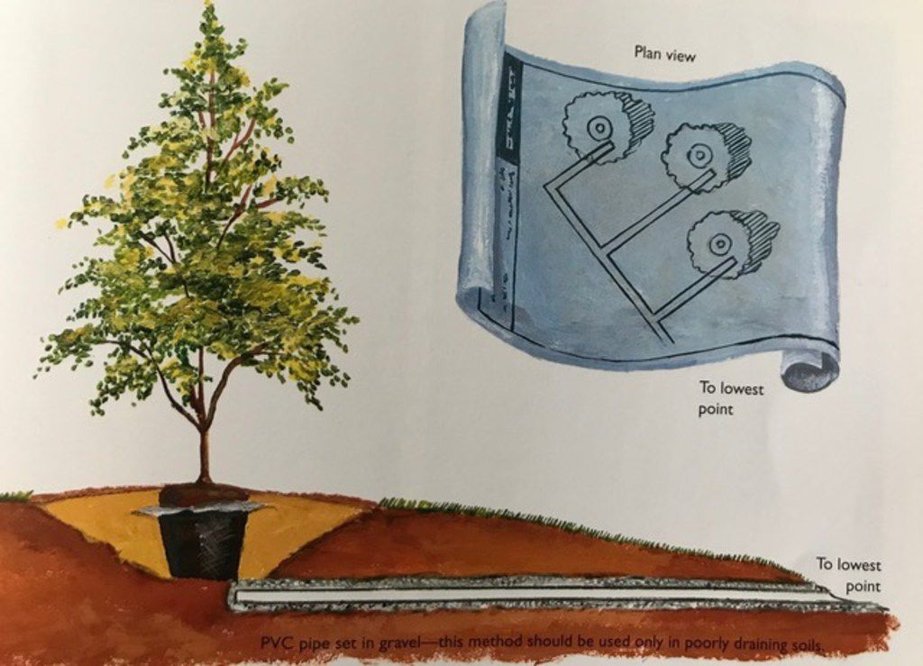 Illustration from Texas Gardening the Natural Way shows how PVC pipe can be used near a tree for better drainage.