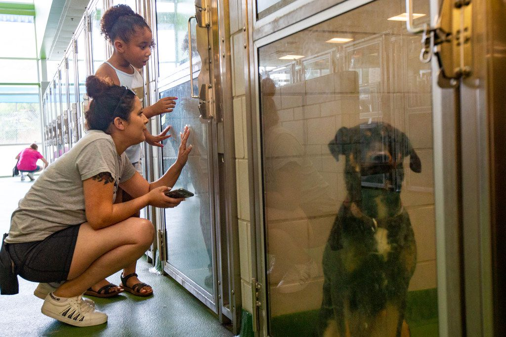 Irene Quinones and her daughter Jada look at dogs available for adoption at Dallas Animal Services on Thursday.