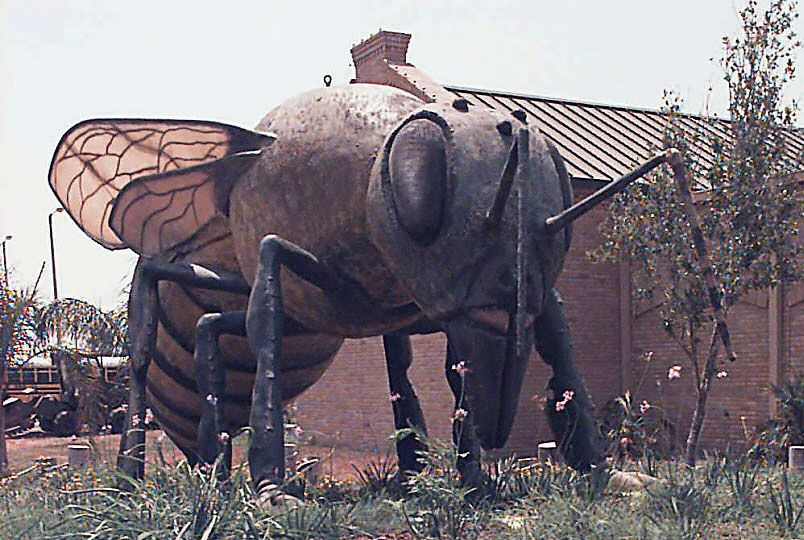 Hidalgo, Texas' killer bee statue is huge, but Africanized honeybees haven't been as big a problem as predicted by a Dallas professor in the 1980s.
