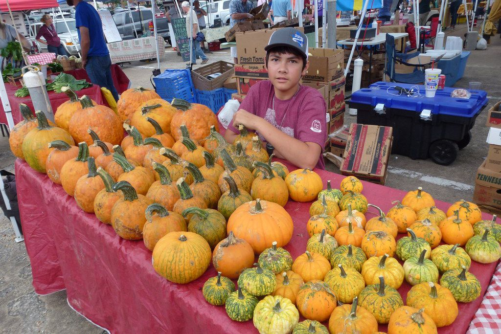 Zachary Fisher helps out at his family's Fisher Family Farm and Ranch table at Good Local White Rock Farmers Market. He's one of the few farmers growing pumpkins.