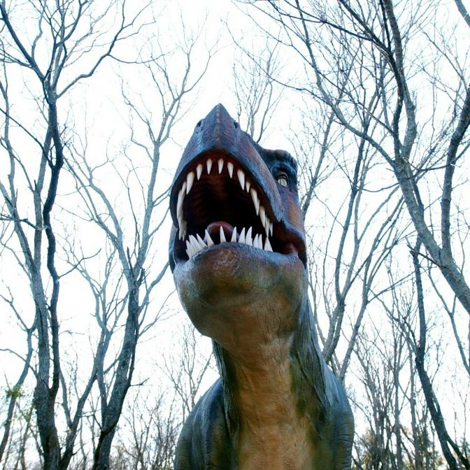 A Tyrannosaurs rex on display at The Heard Natural Science Museum and Wildlife Sanctuary ''Dinosaurs Live!'' exhibit.