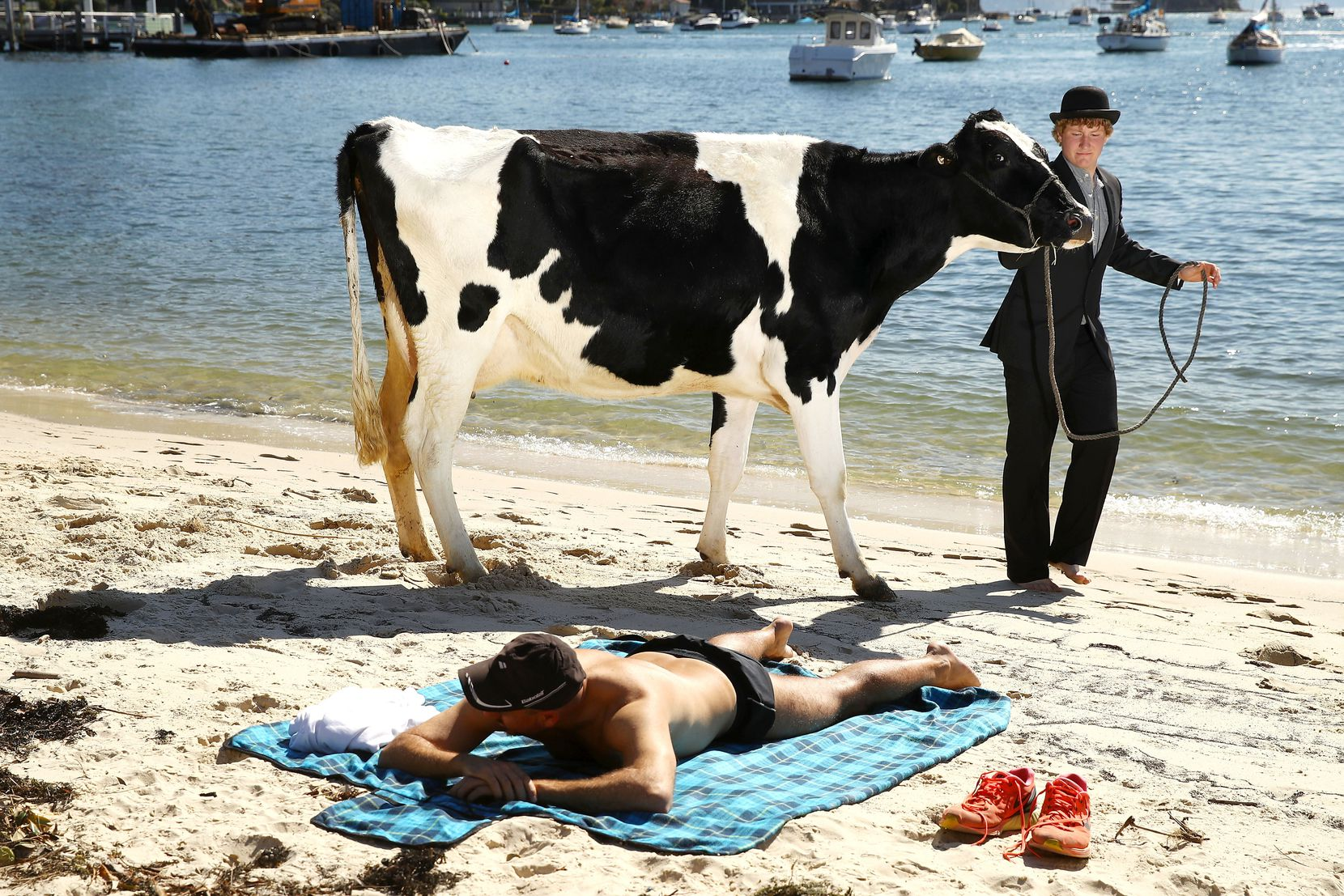 Clint Irrthum walks a cow past a sunbather on the sand as part an Andrew Baines art installation on Double Bay Beach on Tuesday, Aug. 14 in Sydney, Australia. Surrealist artist Andrew Baines orchestrated the spectacle to give the cows a day of rest and relaxation, and break from the mundane and monotonous regime of milking in Sydney's affluent eastern suburb of Double Bay.
