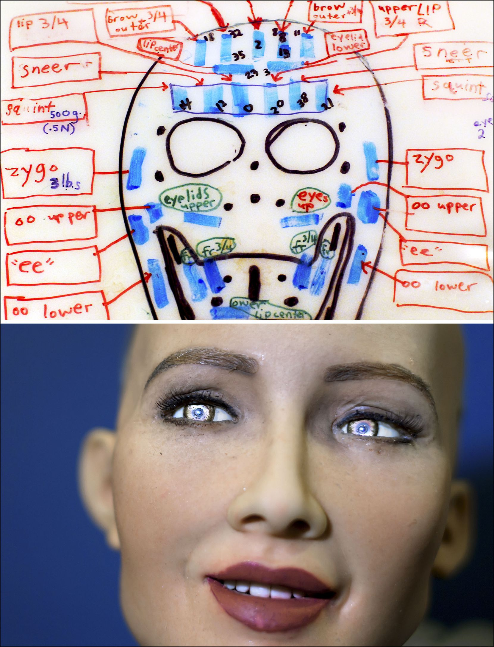 A design for one of Hanson Robotics' heads in 2006, and Sophia in 2017.
