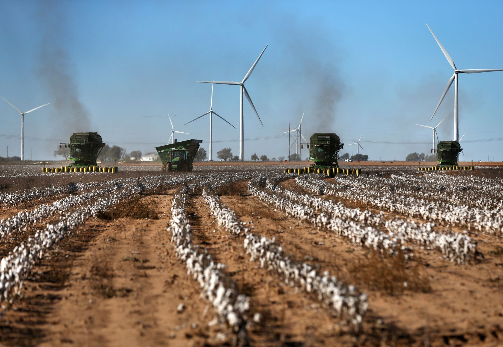 Cotton harvesters pick bolls from lines of cotton on Matt Farmer's farm in Lynn County south of Lubbock.