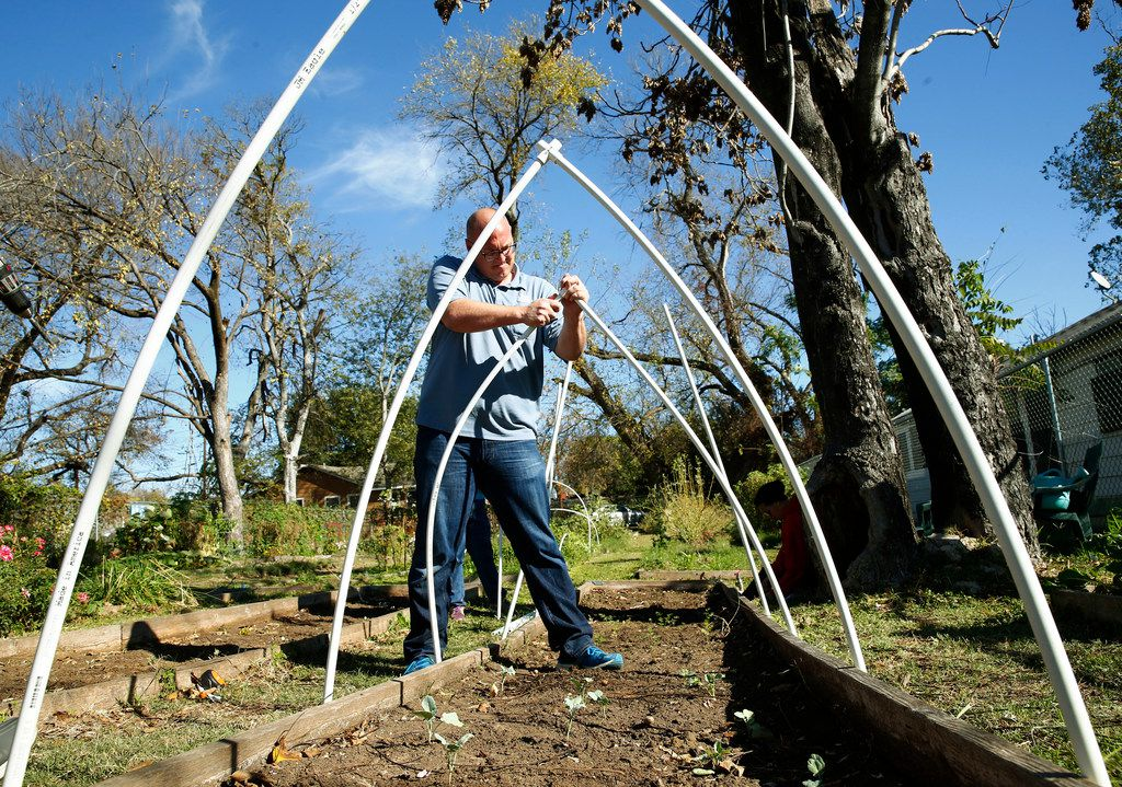 Daniel Cunningham puts up a garden cover using PVC pipe at Sunny South Community Garden in Dallas.