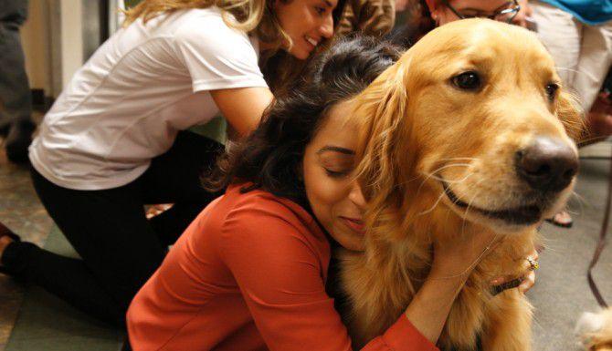 La redacción de Al Día y el Dallas Morning News interactuaron con los perritos expertos en canoterpia / Nathan Hunsinger/ DMN