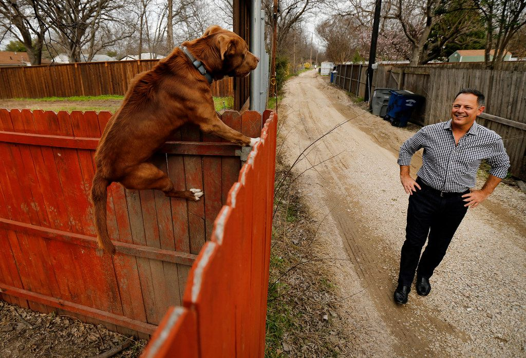 """A dog climbs a backyard fence to get a look at Rep. Rafael Anchia as he walks the alley behind the lot on Espanola Drive in Dallas where Linda """"Michellita"""" Rogers' house stood before the natural gas explosion that killed her last year."""