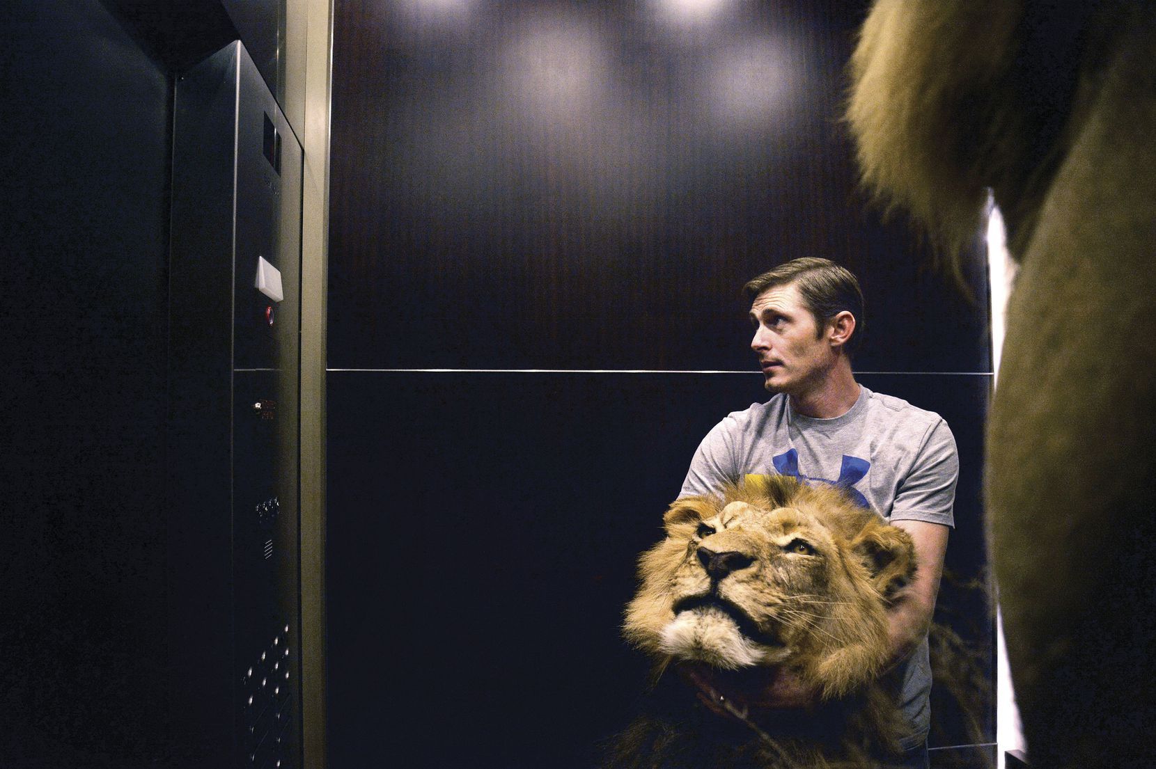 Conroe Taxidermy employee Brandon Casteel held a lion'€™s head in an elevator while he helped set up for a Dallas Safari Club show at the Kay Bailey Hutchison Convention Center on Jan. 6 in Dallas.