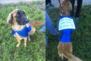 "Rescue dog Chewbacca wore a sign saying ""This could have been me!"" at Saturday's event to memorialize dogs dumped dead and alive at Dowdy Ferry Road. (Sarah Mervosh/Staff Writer)"