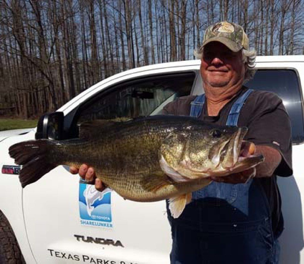 Ronnie Arnold caught this 15.7-pound largemouth bass at Caddo Lake. It is the second Caddo 15-pounder that Arnold has entered in the Toyota ShareLunker big bass hatchery program. ORG XMIT: bdSoA4YxofJNWY1PtEXV