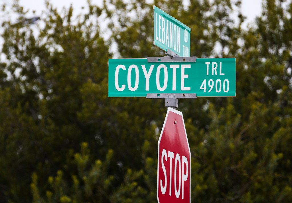 The recent string of attacks by coyotes in Frisco has drawn the attention of national wildlife experts. An urban biologist with the Texas Parks and Wildlife Department says the local incidents are anomalies.