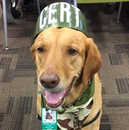 Dog About Town: Sniffing out treats and more things to do