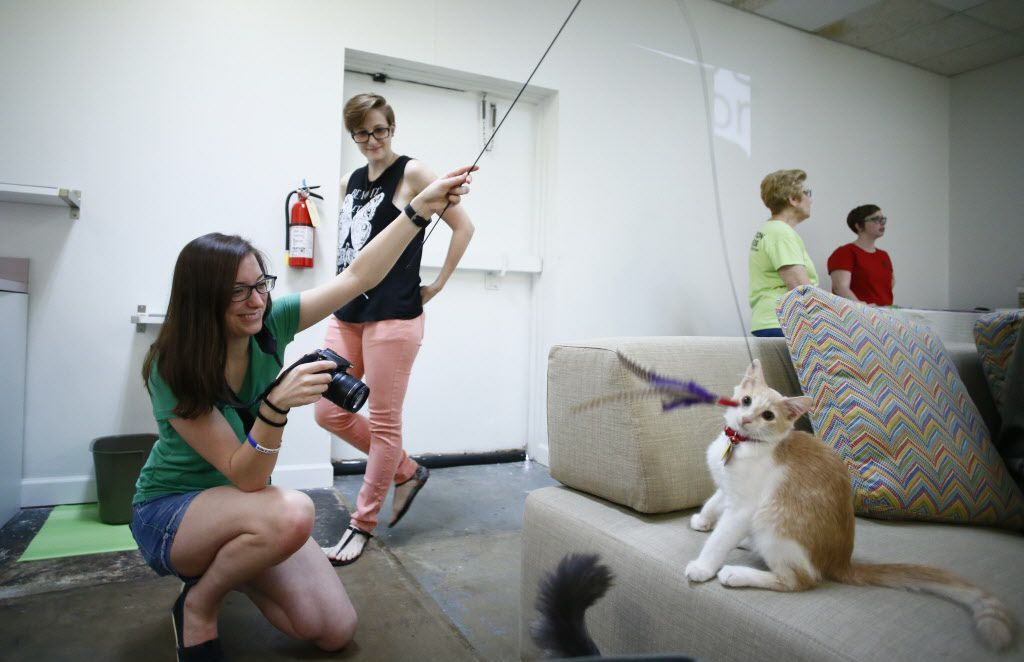 Kathleen Kintz (left) plays with a cat as Hillary Hicken watches during opening day at Cat Connection the first cat cafe in Dallas  August 8, 2015.