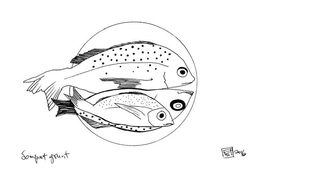 Sompat grunt (Pomadasys jubelini), from Fisherman's Blues, A West African Community at Sea, by Anna Badkhen.