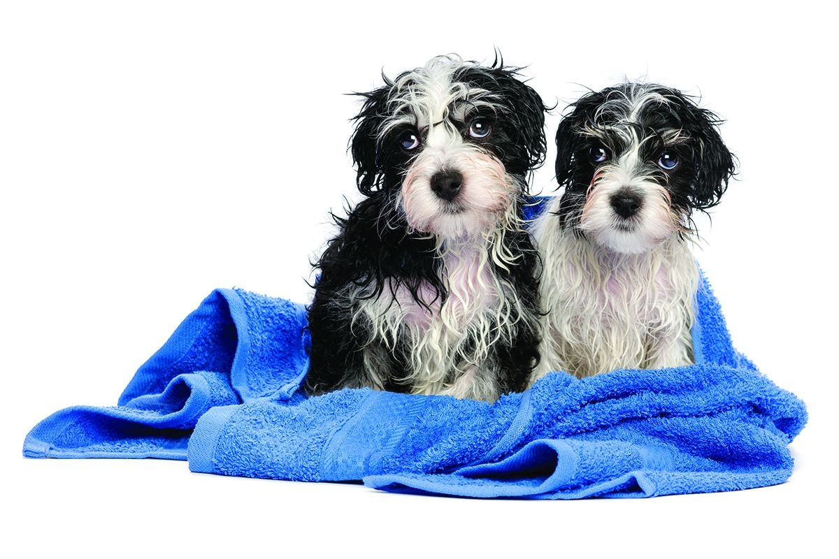 Pet-washing stations are out, for both pets and homebuyers.