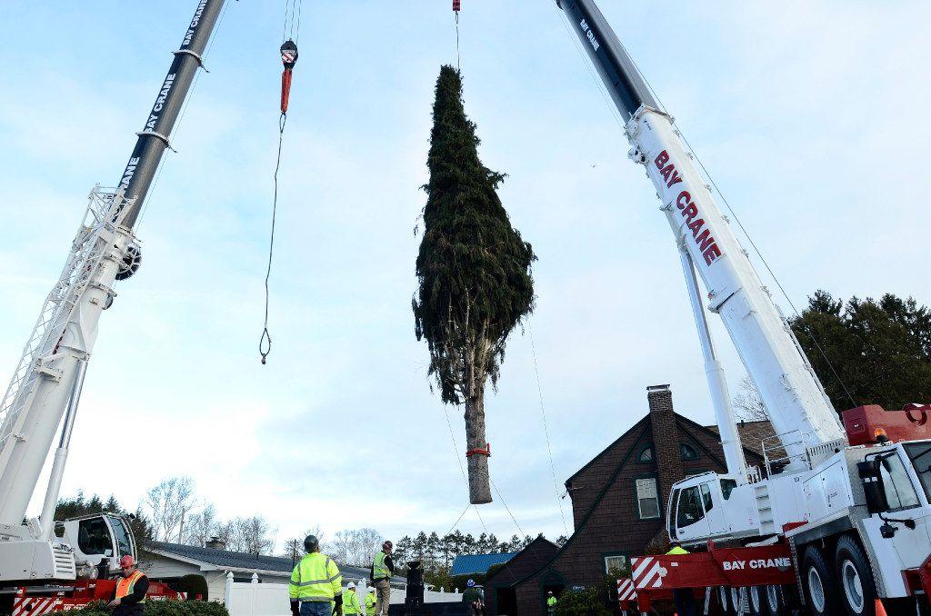 El árbol de Navidad del Rockefeller Center es levantado por dos grúas en un camión de plataforma en la casa de Graig y Angie Eichler en Oneonta, N.Y., el jueves 10 de noviembre de 2016. (HEATHER AINSWORTH/AP)