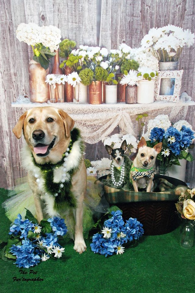 Dog About Town: Playtime and brews on tap this weekend