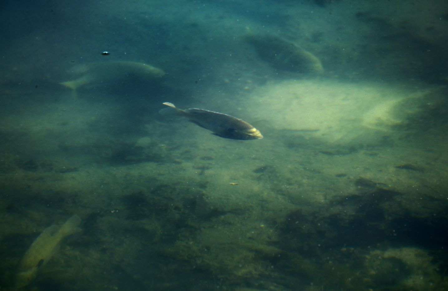 Fish swim in a lake near the lodge.
