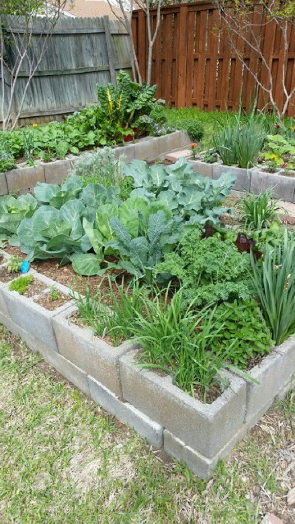 Organic raised bed garden in Dallas on cinder blocks