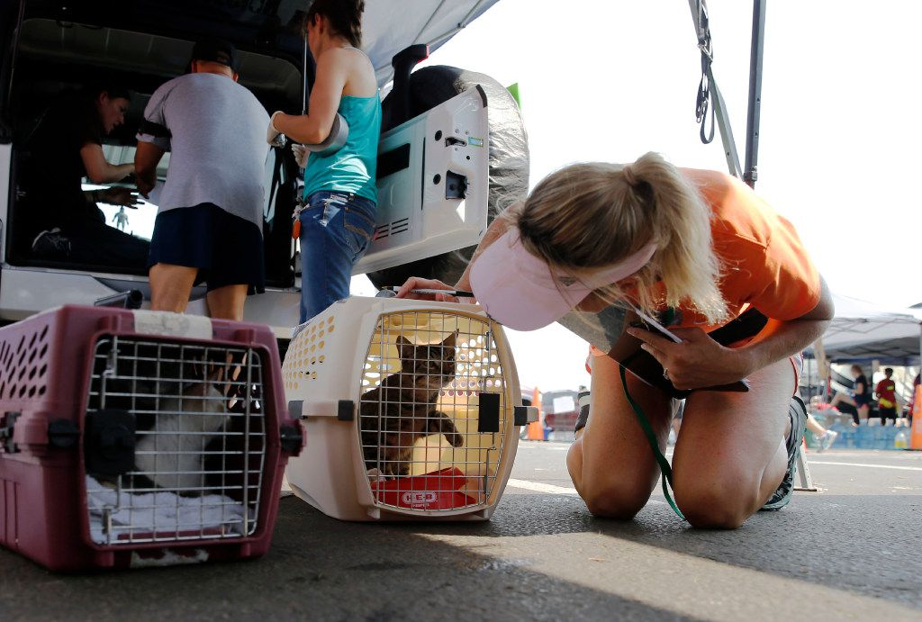 Jennifer Bane of Katy looks at a cat to put identifying notes on its paperwork. The cat was dropped off at a makeshift tent city for animals run by Austin Pets Alive in Katy on Sunday. The nonprofit group is working on getting pets to their families as well as keeping the pets alive. (Vernon Bryant/Staff Photographer)