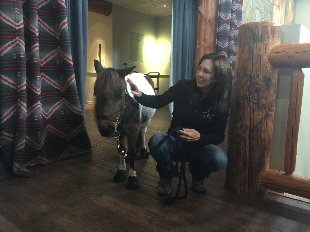 At Jamieson Ranch Vineyards, Brandy Lipsey introduces Sweet Jane to guests to explain its special needs outreach program using miniature therapy horses.