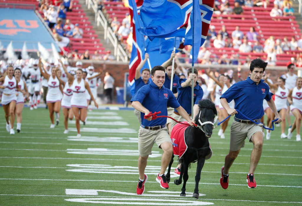 """SMU shetland pony mascot """"Peruna"""" is run in front of the team as they entered the field against Stephen F. Austin during their college football game in University Park, Texas, on September 2, 2017. (Michael Ainsworth/Special Contributor)"""