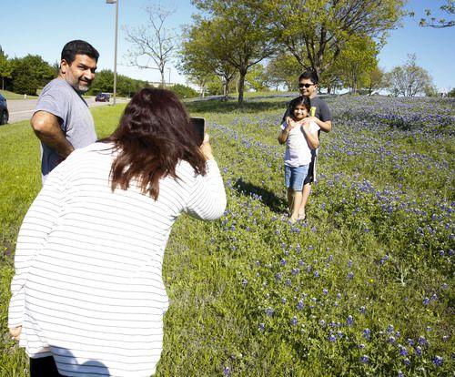 La familia Kerai se toma fotos en W. de Bethany Drive, en Allen, un lugar repleto de bluebonnets. BRIAN ELLEDGE/DMN