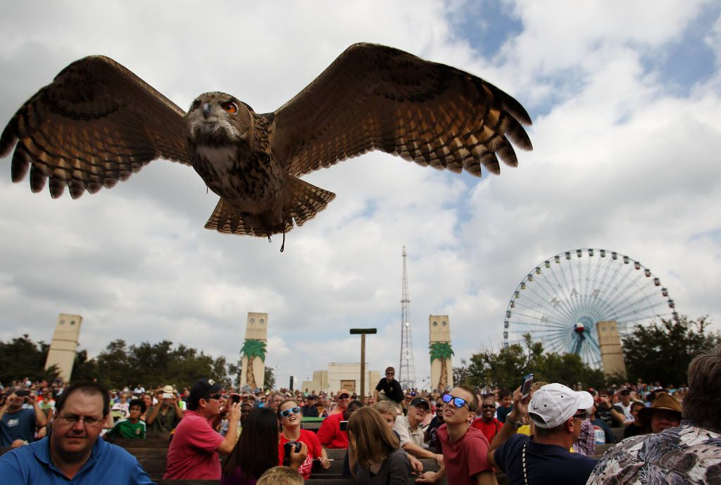 Ziggy, a Eurasian Eagle Owl, flies above the audience during a show at the 2012 State Fair of Texas. World of Birds returns in 2019.