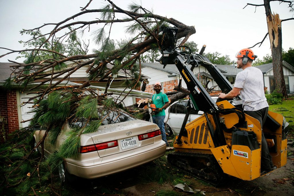 Volunteers from Stoker Tree Service remove a large pine tree that fell on a pair of cars on Andrews St. in North Arlington, Sunday, June 16, 2019. High winds toppled trees in the neighborhood near Globe Life Park as thunderstorms rolled through the Metroplex.
