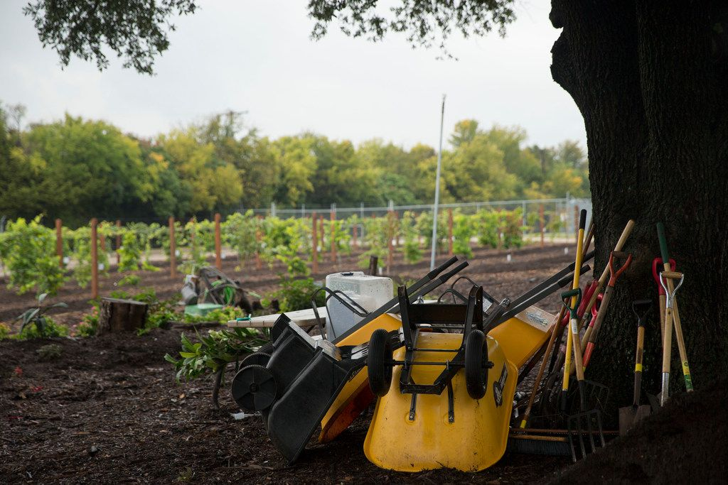 Gardening tools are stacked against a tree at the Dallas County building in Garland. The garden currently has 13 fruit trees, which includes apple trees, plum trees and peach trees.