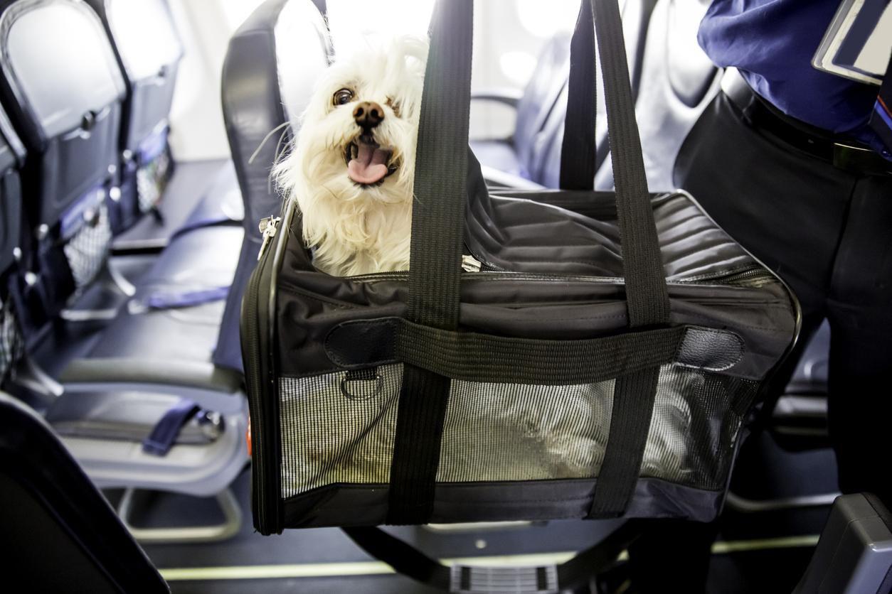 Un perro en una bolsa para maletas abordo de un avión.(GETTY IMAGES)