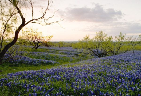 Unusually warm weather has caused wildflowers to bloom early across the state, according to the Texas Parks & Wildlife Department.