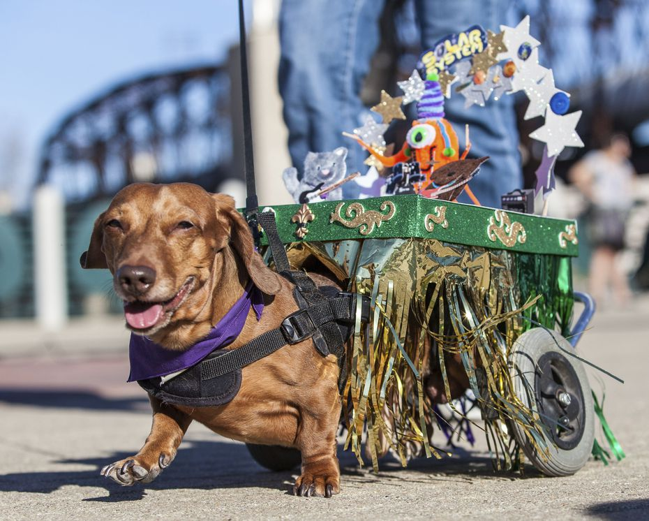 The Krewe of Barkus & Meoux pet parade is always a favorite for kids.