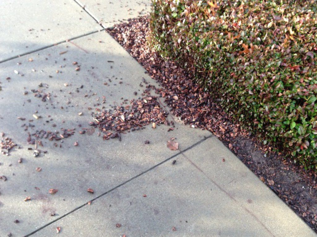 The top three mulch materials for enriching soil