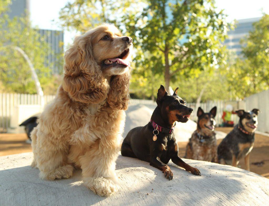 Pups posing at Klyde Warren Park