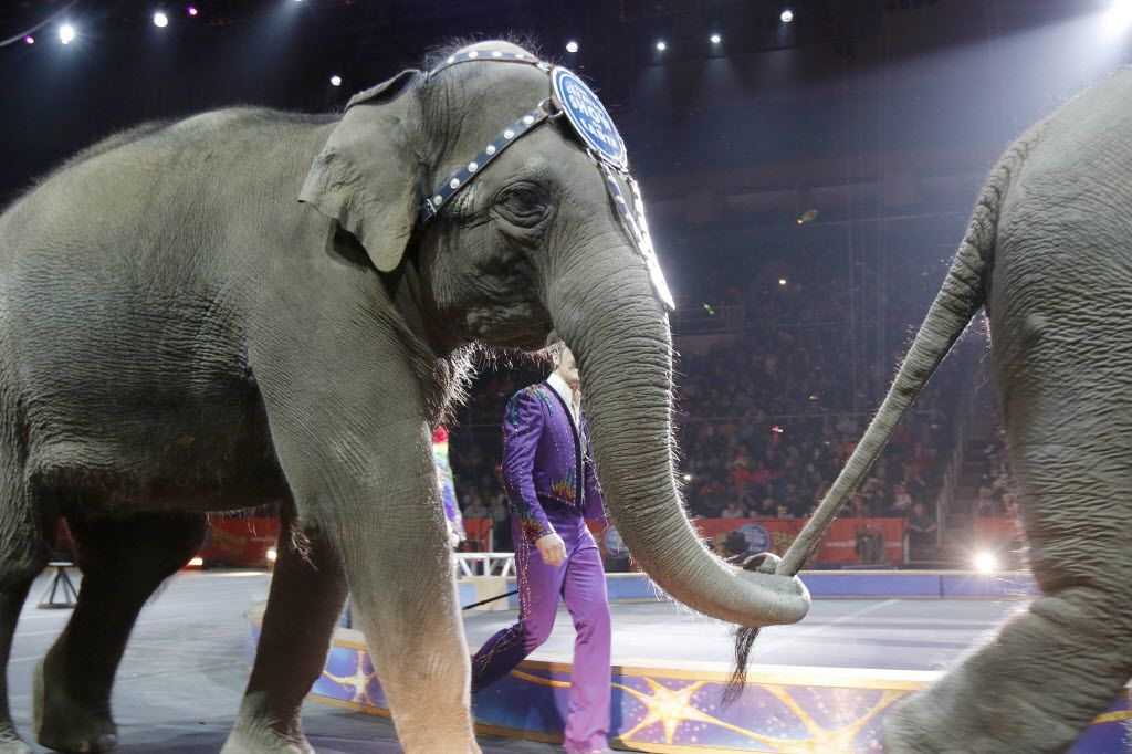Asian elephants performed for the final time in the Ringling Bros. and Barnum & Bailey Circus on Sunday in Providence, R.I. The circus is closing its own chapter on a controversial practice that has entertained audiences since circuses began in America two centuries ago. The animals will live at the Ringling Bros. Center for Elephant Conservation in Florida.