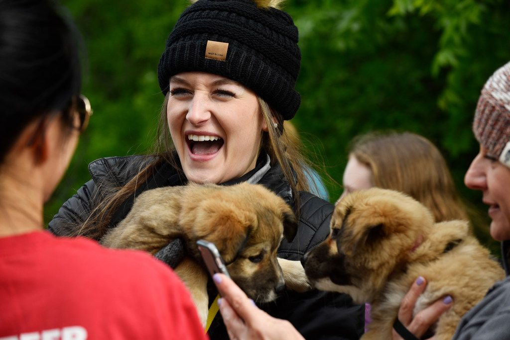 Rylee Greenwood, left, reacts with laughter while playing with a Australian Shepherd mix puppy named Suki before the start of Puppy Yoga near the Northaven Trail in Dallas, Saturday morning, April 14, 2018. The yoga was conducted by CorePower Yoga and a portion of the proceeds from the event benefited the Dallas based non-profit Artists for Animals. Puppies were provided by Operation Kindness