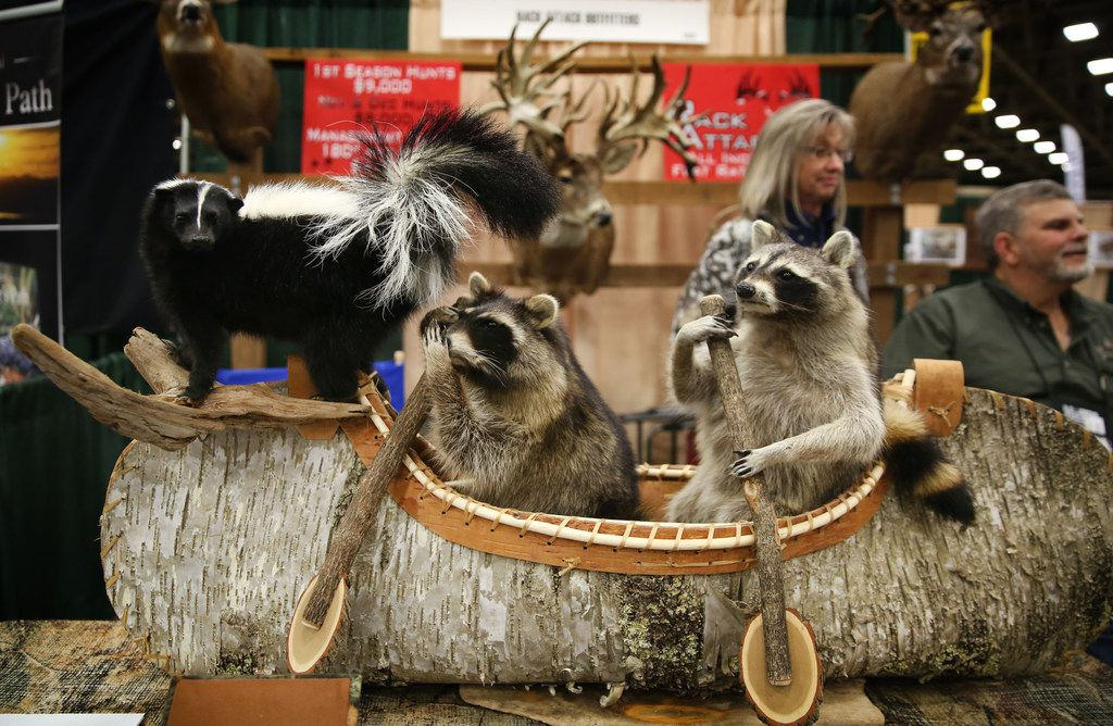 A taxidermy work sits on display during the Dallas Safari Club annual convention and sporting expo at the Kay Bailey Hutchison Convention Center in Dallas on Thursday, Jan. 4, 2018.