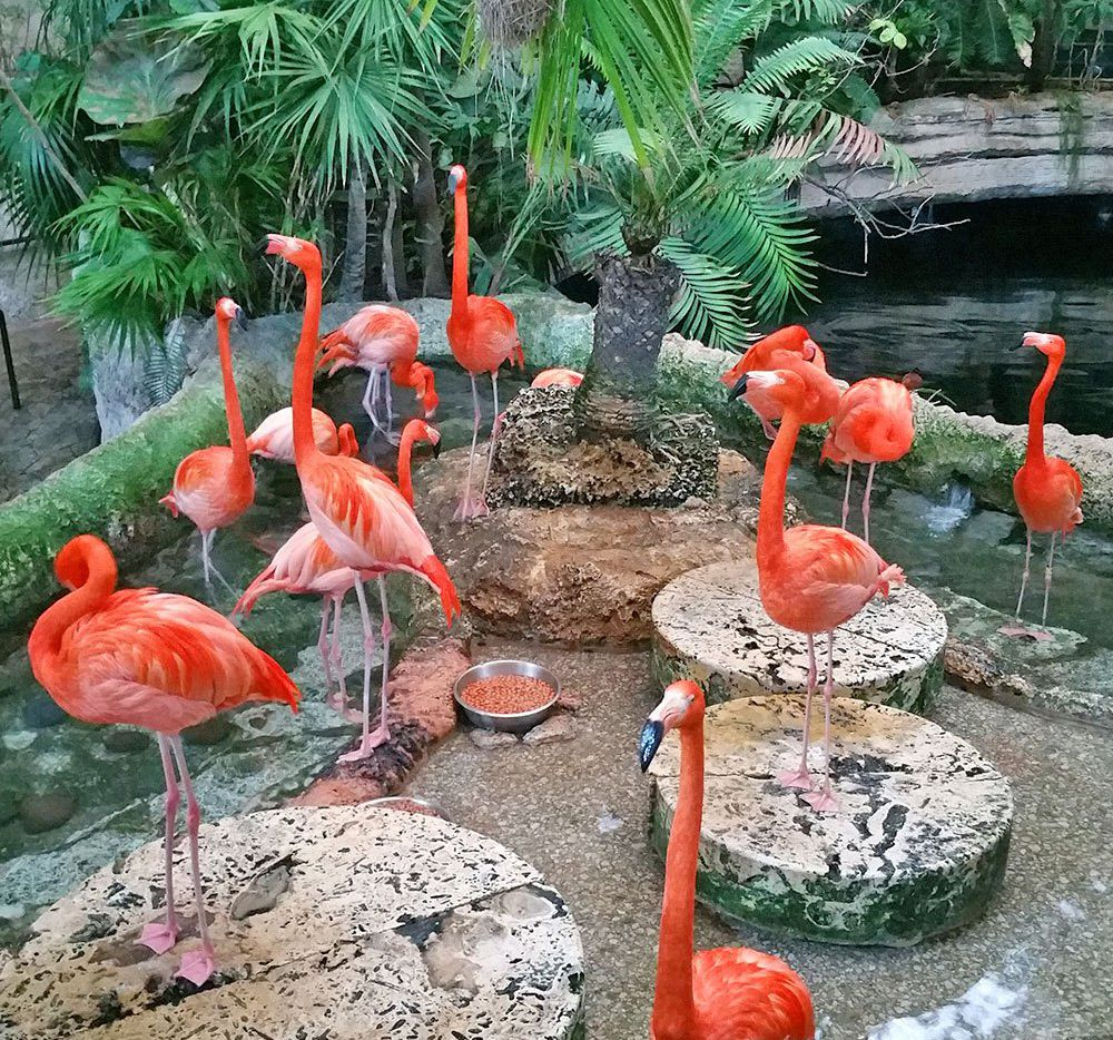 The biggest surprise about the Dallas World Aquarium is that it's not just fish – it's actually a zoo, and very tropical.