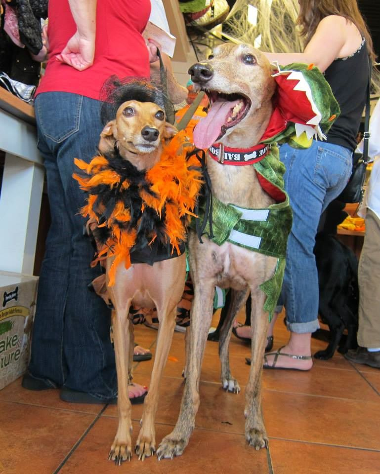 Serafina and Red were among the contenders at the annual Howl-O-Ween contest at the Three Dog Bakery in Plano. Top of page: Braylee won for cutest costume.