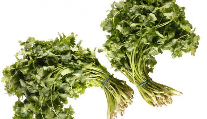 Manojos de cilantro.(DMN)