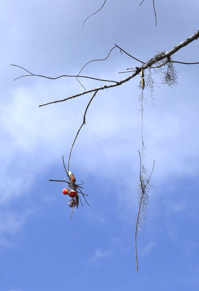 Fishing bobbers, hooks and lures hang from a branch near the pier in Caddo Lake State Park in Karnack, Texas Tuesday June 19, 2018. Fishing is one of the main attractions at Caddo Lake.
