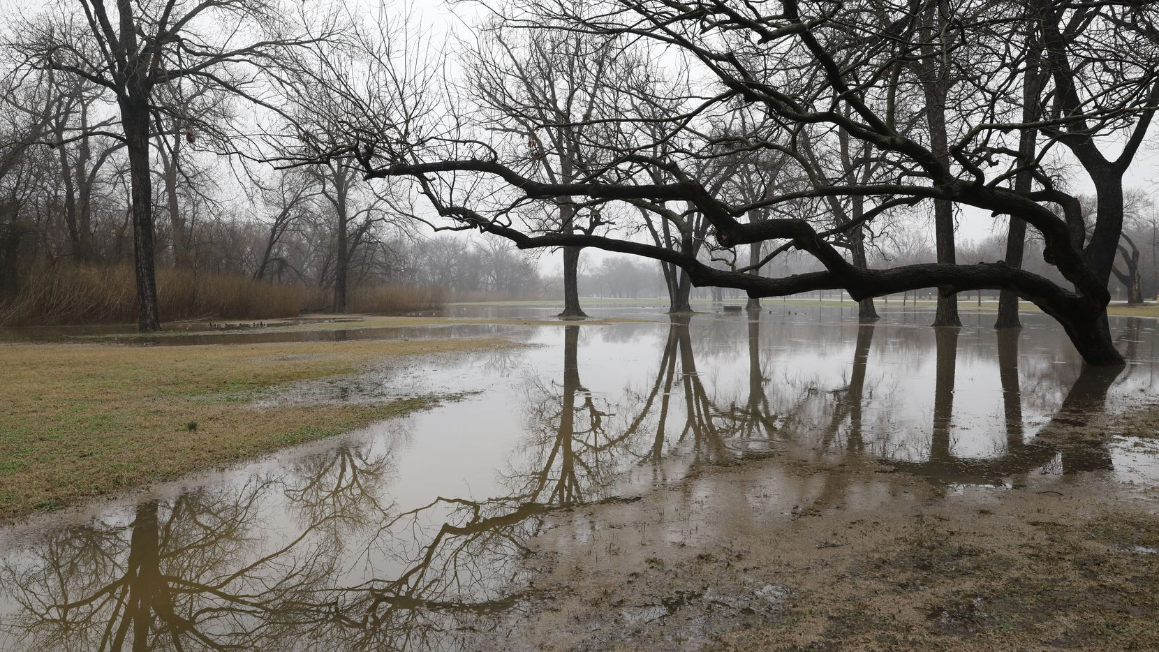 Trees are reflected in the water at White Rock Lake in Dallas after heavy rains Thursday.