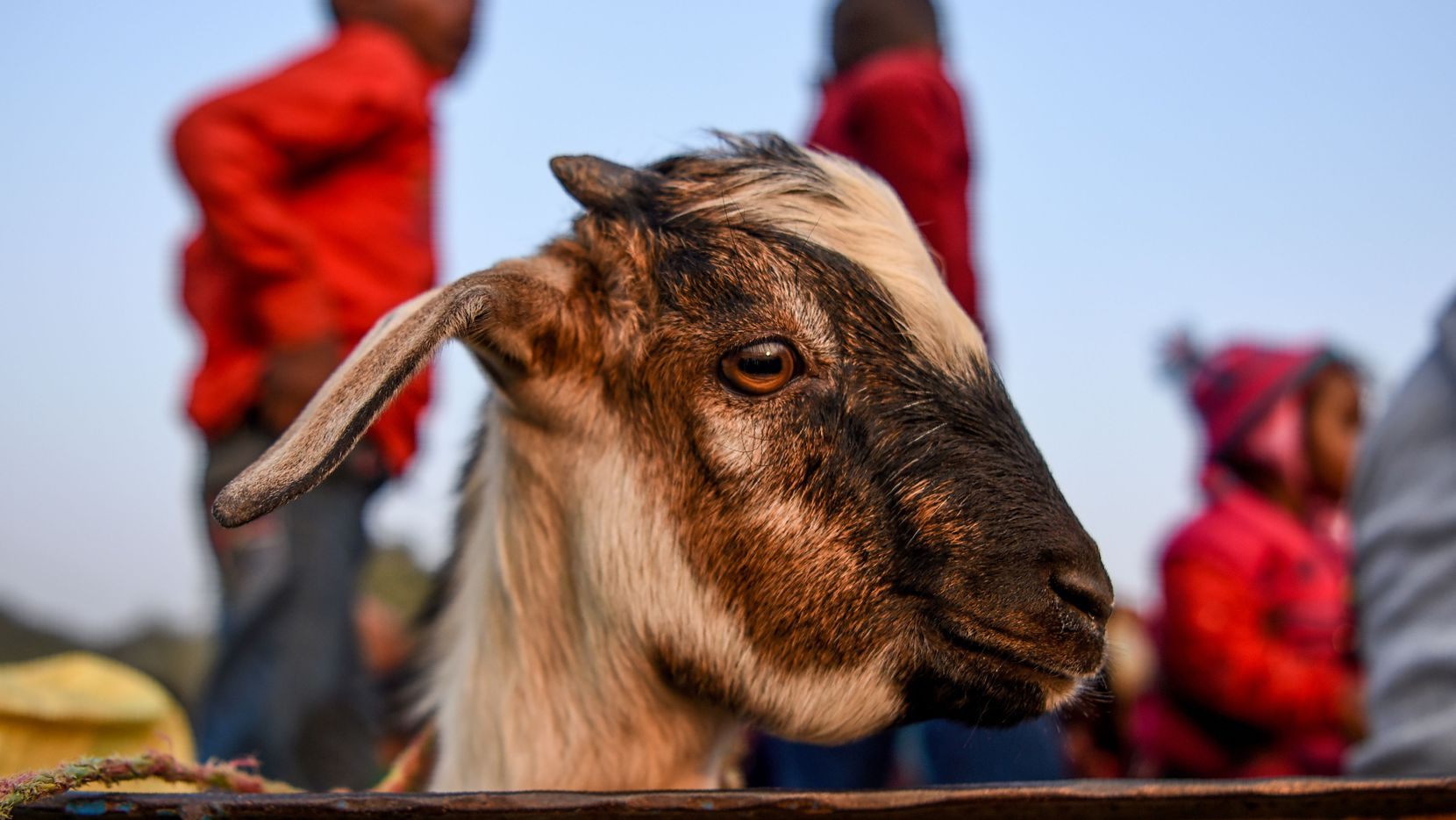 """The Story of a Goat"" by Perumal Murugan is just that -- and it works, beautifully."