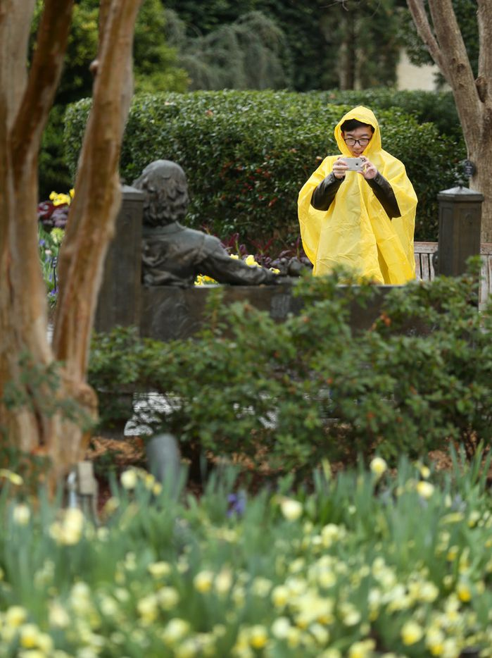 """Junkai Zhong takes a photo of a statue of William Shakespeare at the Dallas Arboretum in Dallas on Friday, Feb. 22, 2019. The annual Dallas Blooms festival, themed """"Life's A Picnic,"""" runs Feb. 23 through April 7 and will include more than 100 varieties of spring-blooming bulbs and 500,000 tulips."""