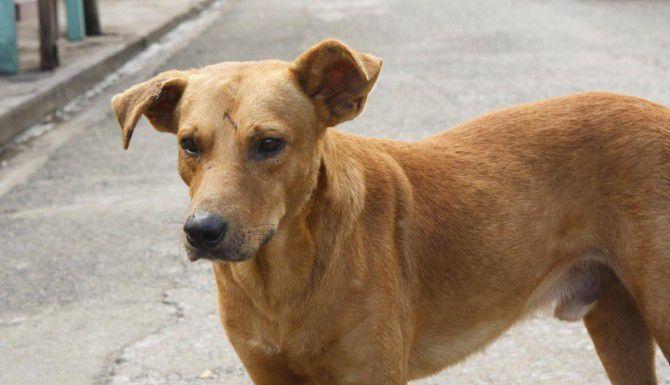 El envenenamiento de perros en Hermosillo comenzó con perros callejeros, pero ahora se ha detectado veneno en patios y jardines de viviendas.(iSTOCK)