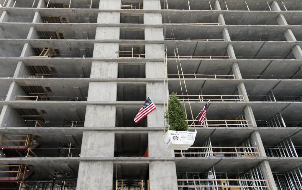 A leyland cypress is lifted from the ground during the topping out ceremony at the Omni Frisco Hotel at The Star in Frisco on Wednesday, July 27, 2016. The 16-story 300 room hotel is scheduled to be complete in the summer of 2017. (Vernon Bryant/The Dallas Morning News)