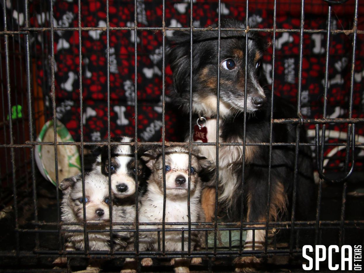 Dead puppies found bagged in freezer at filthy Dallas-area