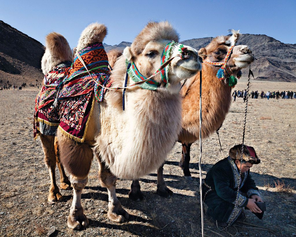 Nomadic Expeditions offers an opportunity to ride a camel through Mongolia'•s Gobi Desert.